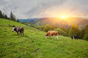 Lubbock Texas Farm and Ranch Insurance